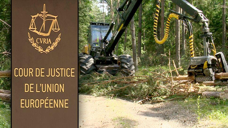 Unijny Trybunał wydał nakaz natychmiastowego wstrzymania wycinki Puszczy