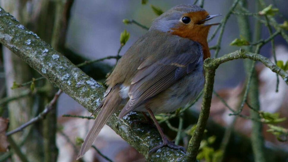 Ameryka Północna: w ciągu 50 lat wymarło 30 procent gatunków ptaków