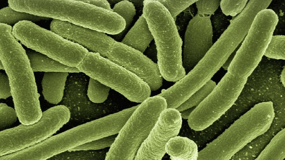 Eksperci ostrzegają przed bakteriami odpornymi na antybiotyki