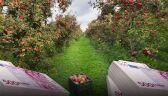 31.07.2014   Ile będzie kosztować Polskę rosyjskie embargo na owoce i warzywa?