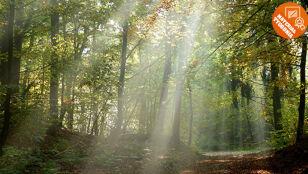 Magiczne oblicze lasu zwyciężyło