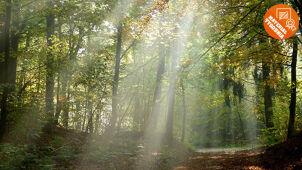 Magiczne oblicze lasu Was zachwyciło