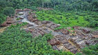 Ubywa lasów w Amazonii