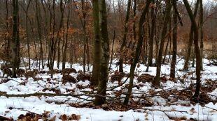 Dwa kroki, postój, obserwacja. Malutkie dziki idą przez las