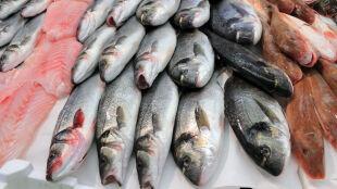 Przełowienie, wzrost konsumpcji, mikroplastik i zmiany klimatu. Co zagraża rybom