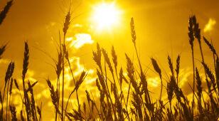 Koniec lata tuż-tuż. Klimatolodzy: w Polsce było miejscami rekordowo gorąco