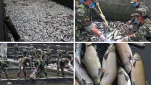50 ton martwych ryb po trzęsieniu ziemi