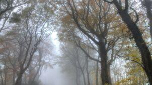 Prognoza pogody na jutro: mglisty poranek i słoneczne popołudnie