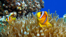 Gdzie jest Nemo? Może być nawet 400 kilometrów dalej