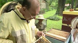 Ogród pełen pszczół